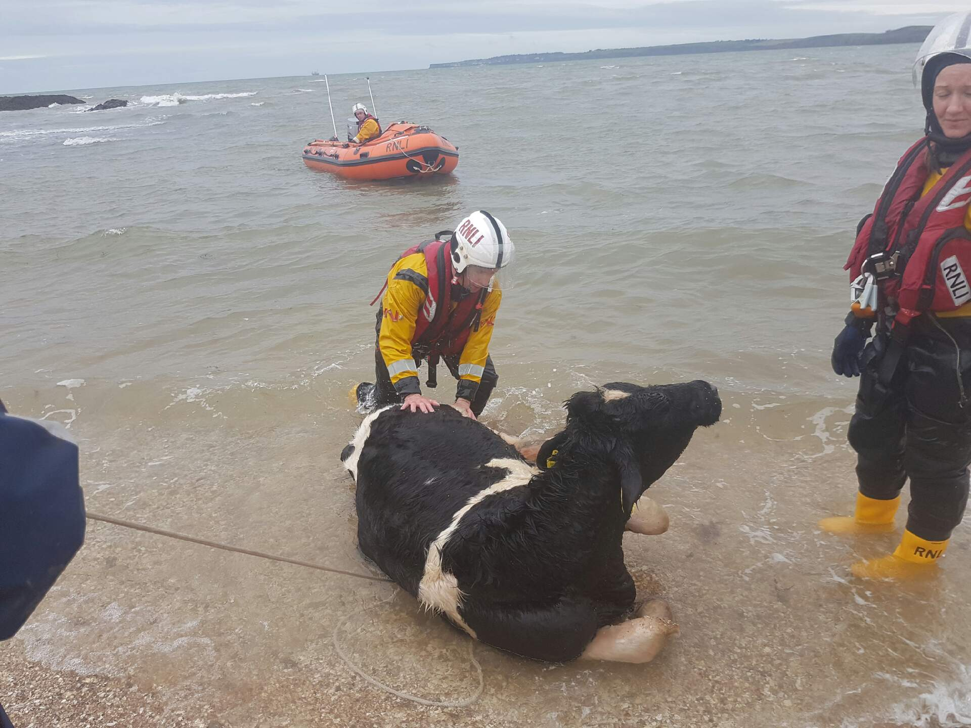 Fethard lifeboat crew check on rescued cattle